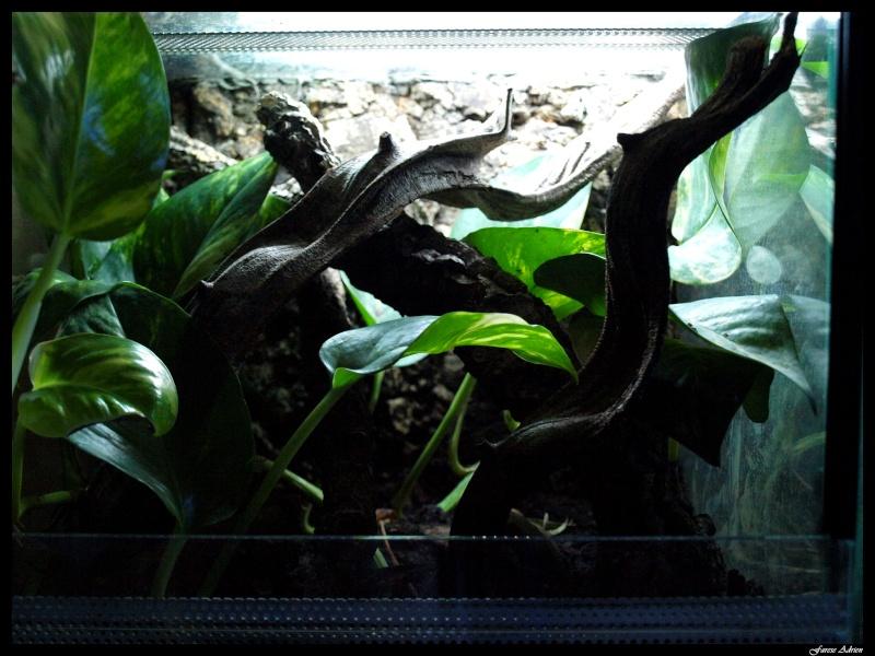 Quelques terrariums ... Terra_10