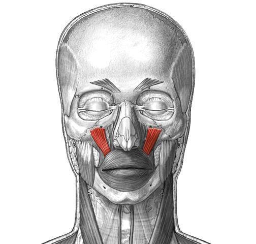 Anatomie fonctionnelle humaine Levato10