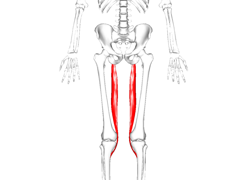 Anatomie fonctionnelle humaine Semite10