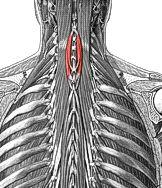 Anatomie fonctionnelle humaine Spinal10