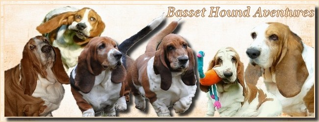 créer un forum : basset hound aventures - Portail Bannie10
