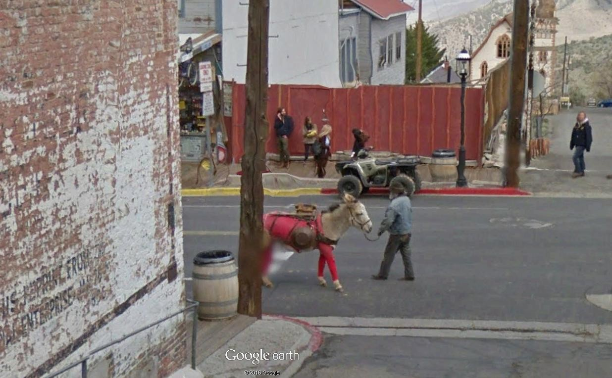 STREET VIEW : Les animaux - Page 10 Ane10