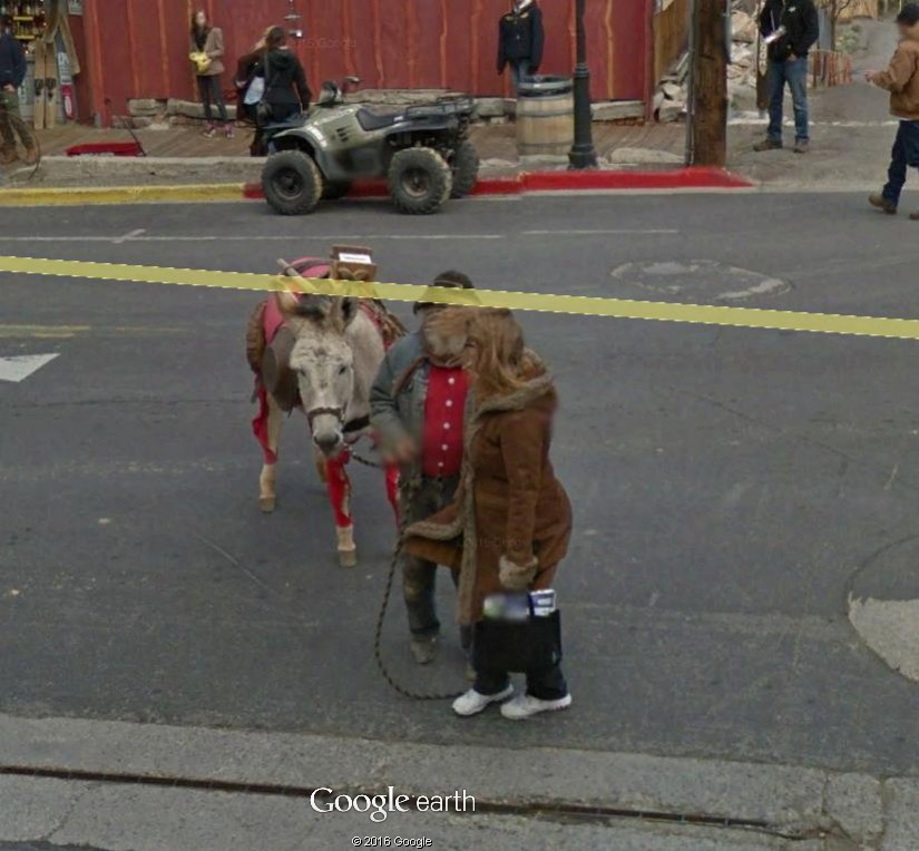 STREET VIEW : Les animaux - Page 10 Ane210