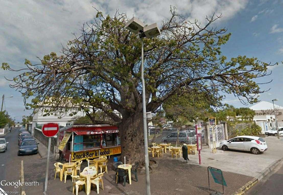 Végétation de la Réunion Baobab10