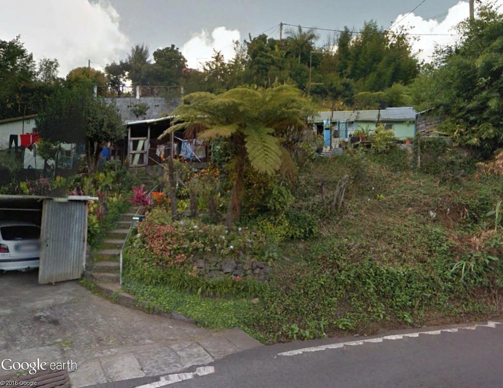 Végétation de la Réunion Fougyr10