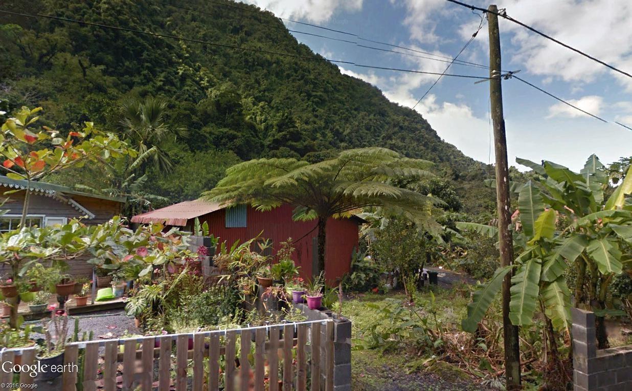 Végétation de la Réunion Fougyr11