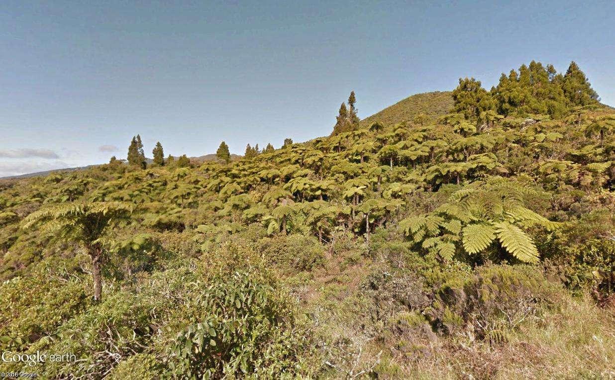 Végétation de la Réunion Fougyr12
