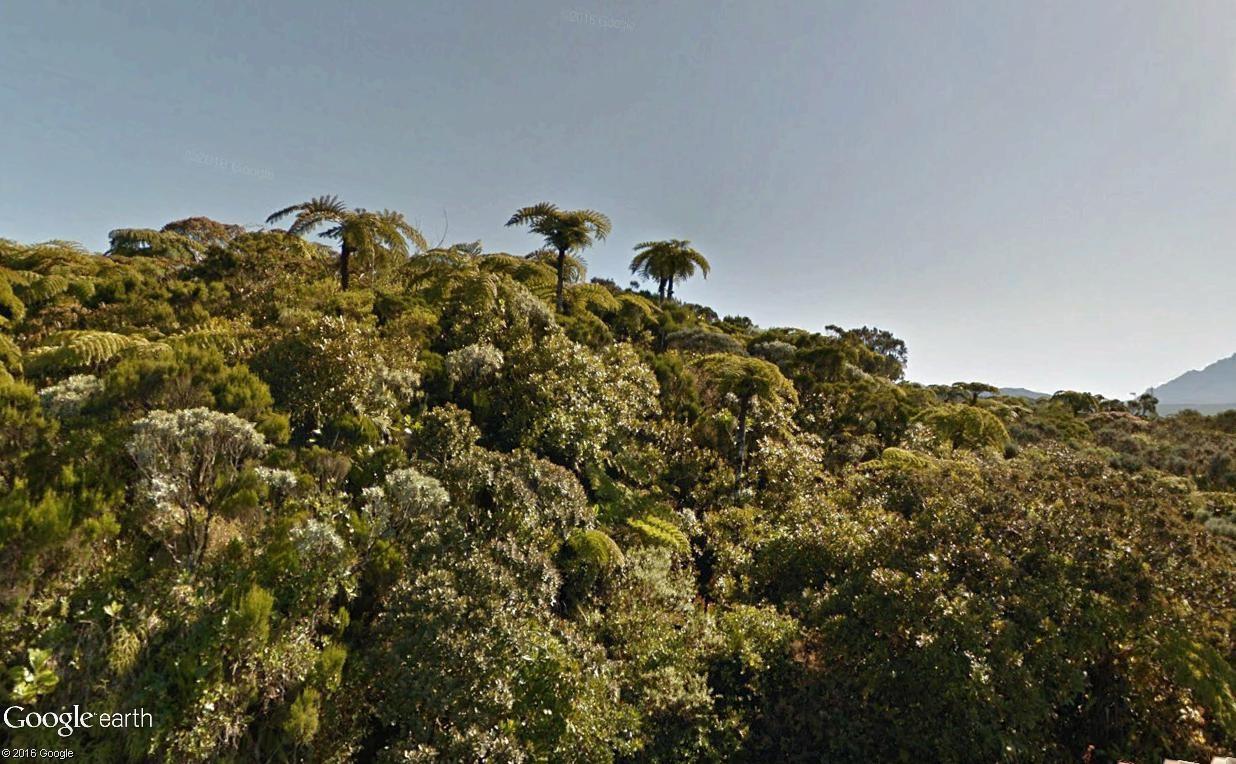 Végétation de la Réunion Fougyr13