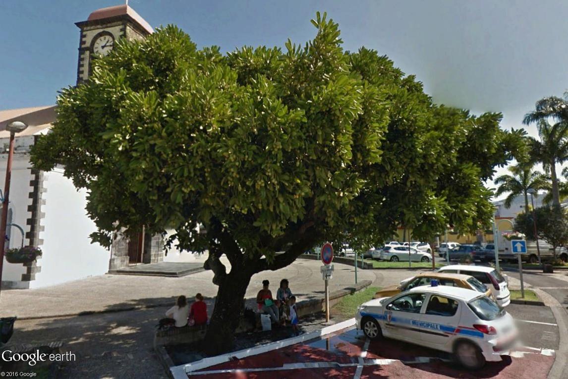 Végétation de la Réunion Pomme_11