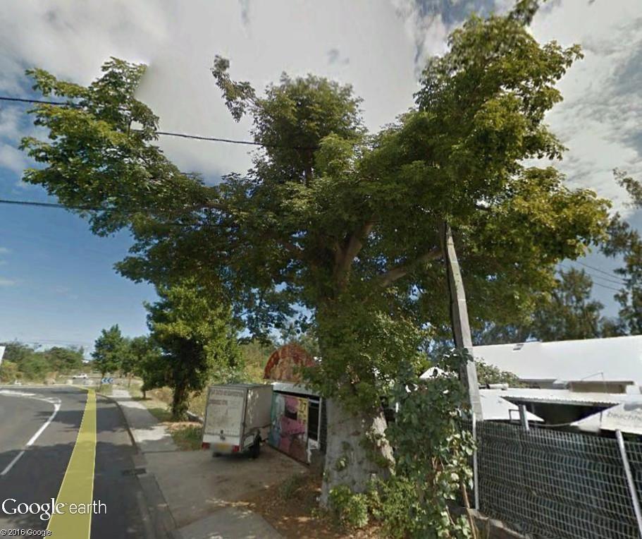 Végétation de la Réunion Stleu_11