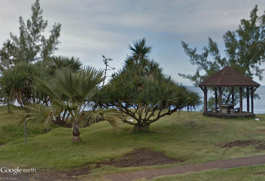 Végétation de la Réunion Va10
