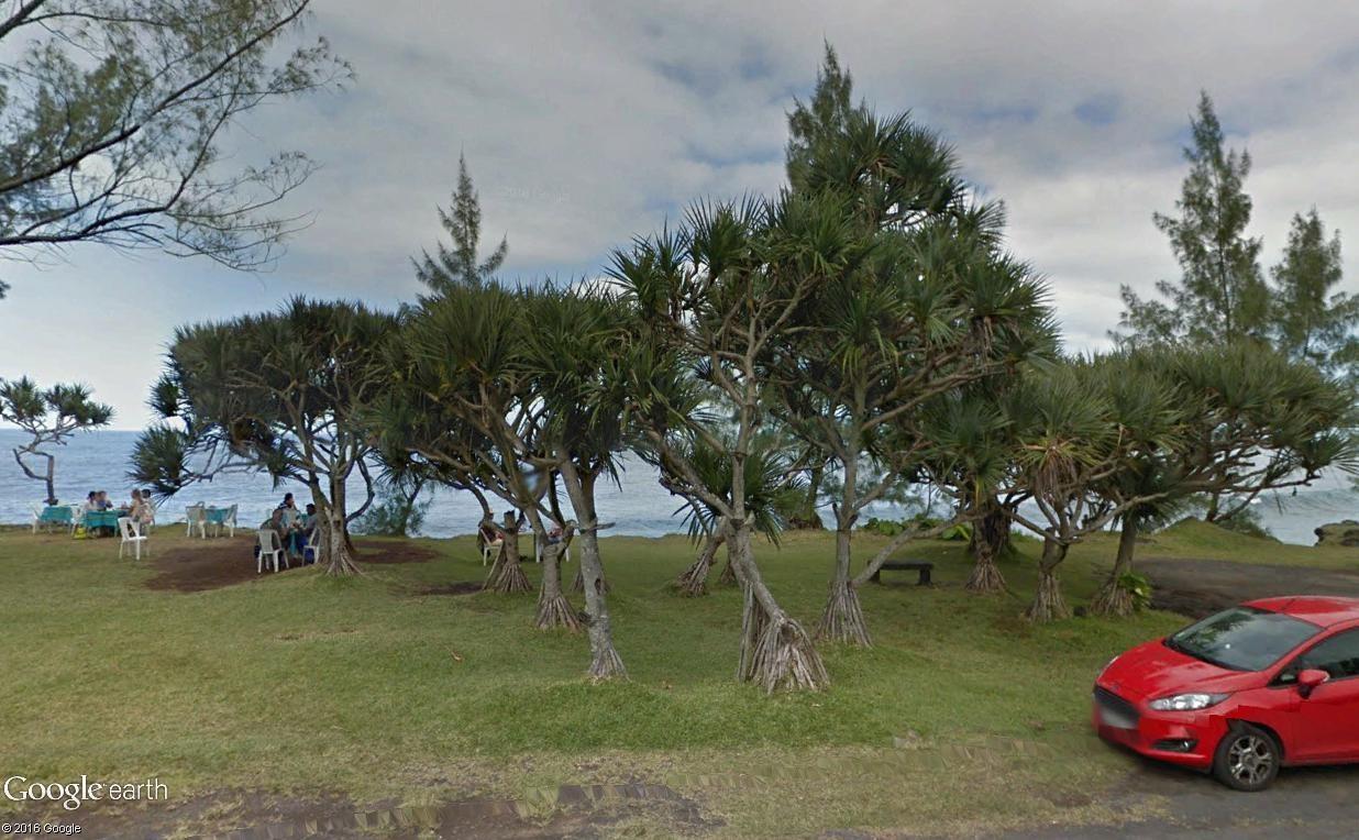 Végétation de la Réunion Va210