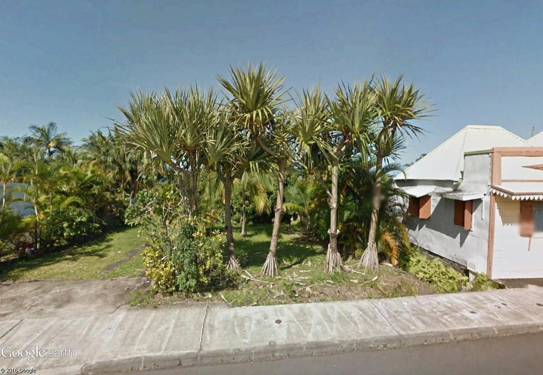 Végétation de la Réunion Vacoa_10