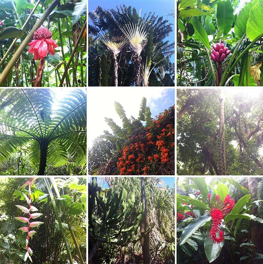 Végétation de la Réunion Veigei10