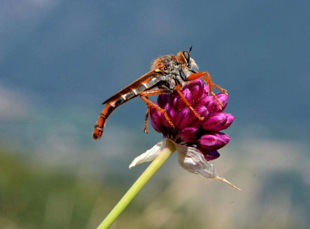 deux insectes à identifier Insect10
