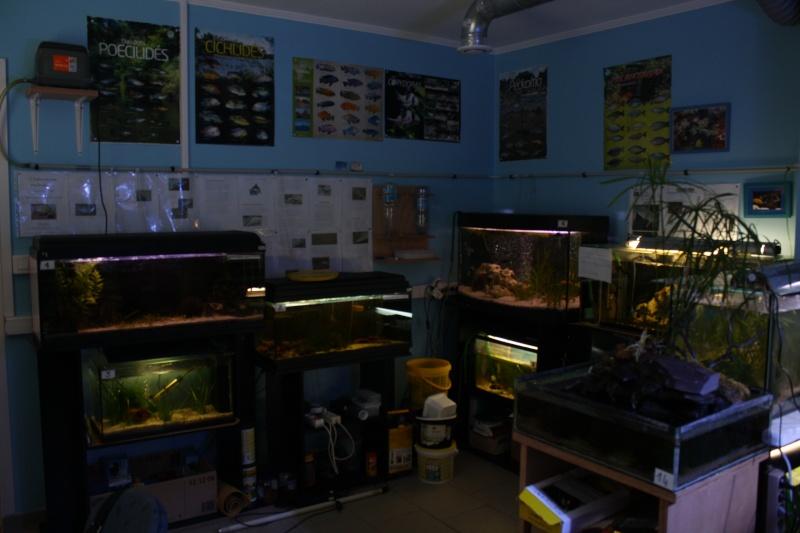[59] Association d'aquariophilie d'Orchies  - Page 2 Img_3711