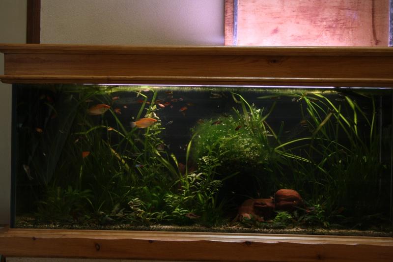 [59] Association d'aquariophilie d'Orchies  - Page 2 Img_3811