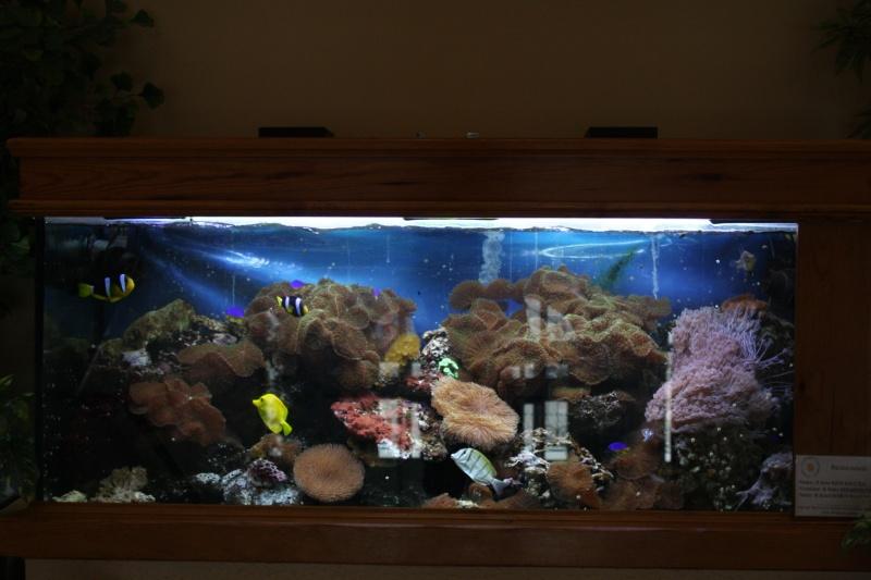 [59] Association d'aquariophilie d'Orchies  - Page 2 Img_3812