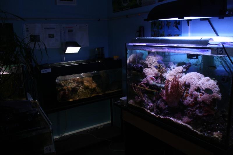 [59] Association d'aquariophilie d'Orchies  - Page 2 Img_3813