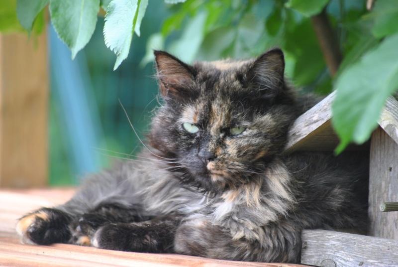 Kitty Cat, née le 1er août 2010 STATUT :CHAT LIBRE - Page 3 Dsc_0084