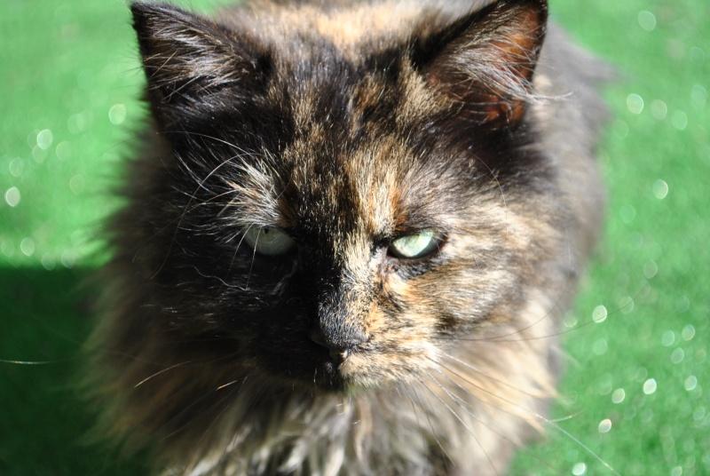 Kitty Cat, née le 1er août 2010 STATUT :CHAT LIBRE - Page 3 Dsc_0085