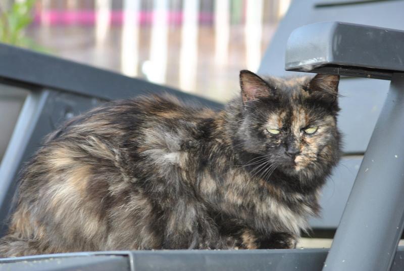 Kitty Cat, née le 1er août 2010 STATUT :CHAT LIBRE - Page 3 Dsc_0091