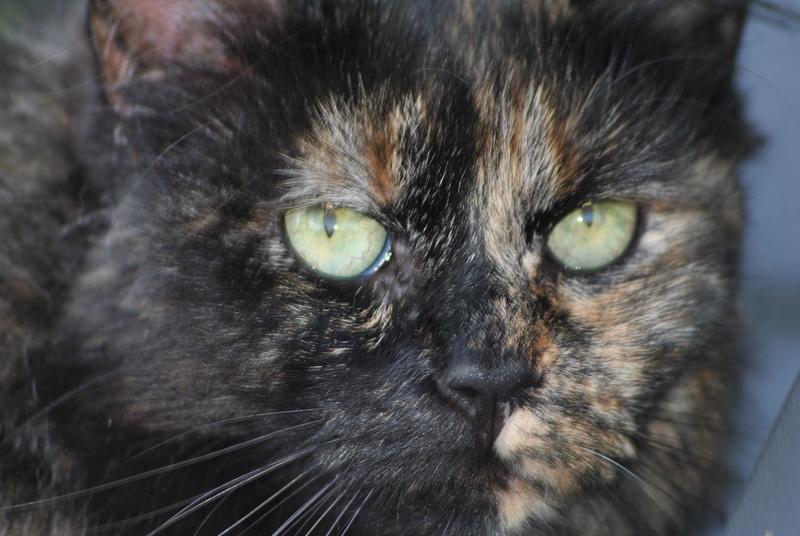 Kitty Cat, née le 1er août 2010 STATUT :CHAT LIBRE - Page 3 Dsc_0093