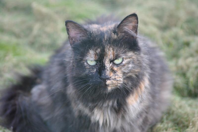 Kitty Cat, née le 1er août 2010 STATUT :CHAT LIBRE - Page 3 Dsc_0094