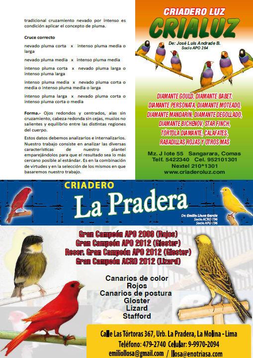 REVISTA APO n°14 518
