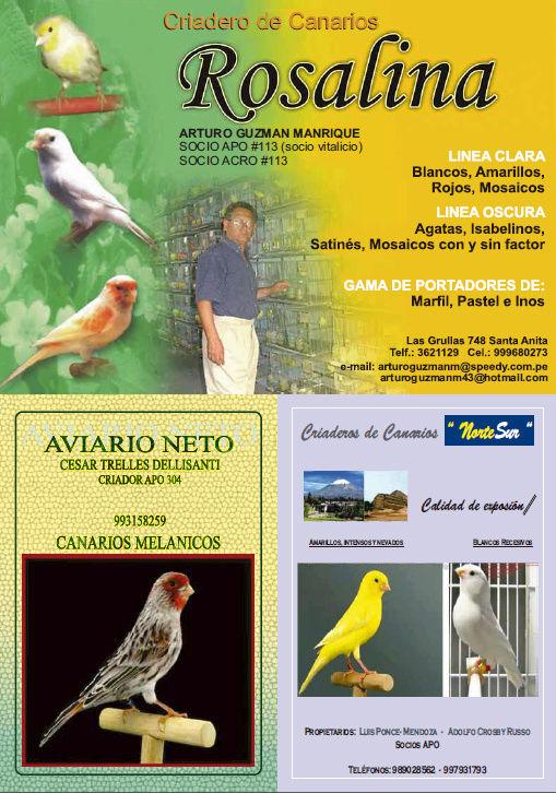 REVISTA APO n°14 619