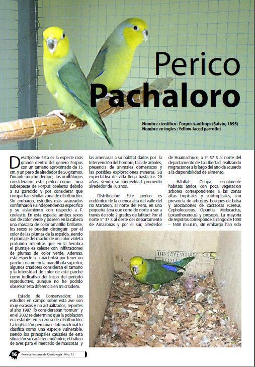 REVISTA APO n°13 718