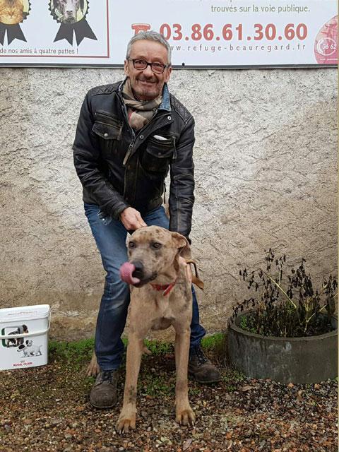 NORTON (Chien de cour Italien) Adopt152