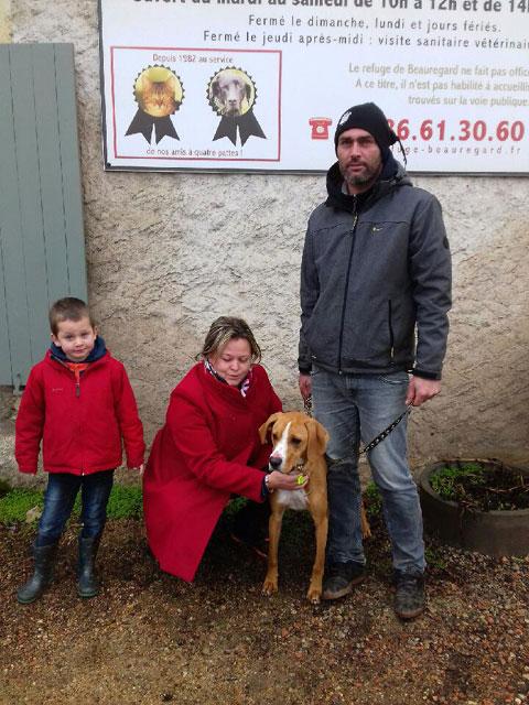 LE KID (Beagle croisé Boxer) Adopt178