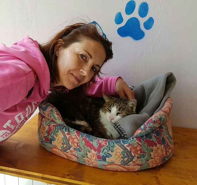 VEGA (Tabby et blanc) - FIV+ Adopt293