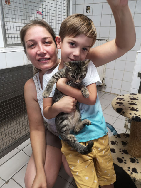 ROSIE (Tabby) Adopt349