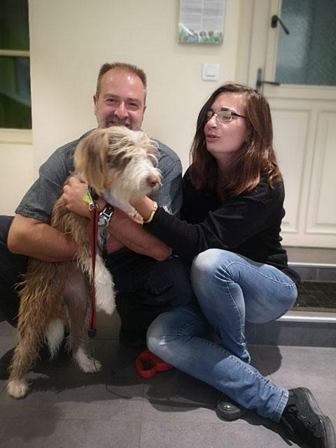 OLLIE (Berger des Pyrénées croisée Border) Adopt358