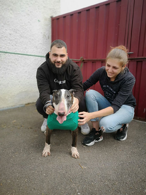 E WAY TO HELL (Bull Terrier) Adopt359