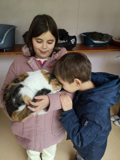 FLORA (Tricolore) Adopt401
