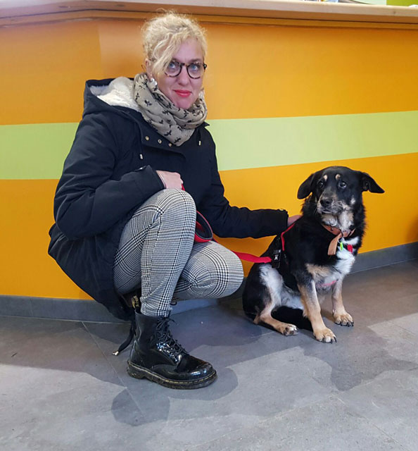 HOLLY (Croisée Berger) Adopt426