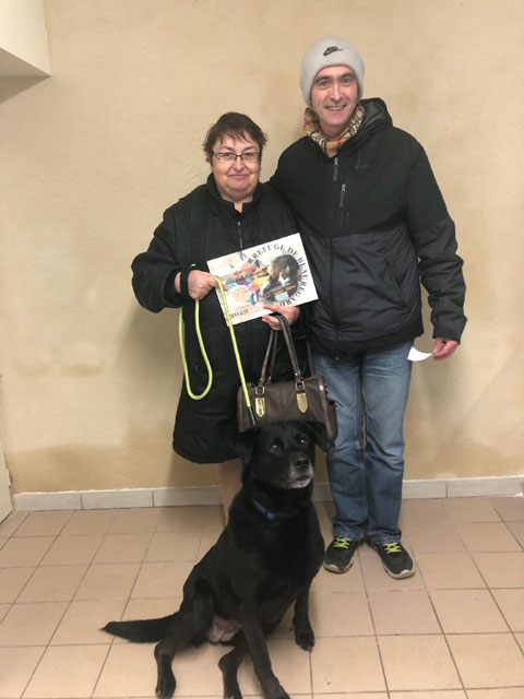 ECLYPSE (Labrador) Adopt429