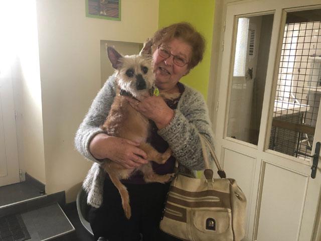 ESTON (Yorkshire Terrier) Adopt451