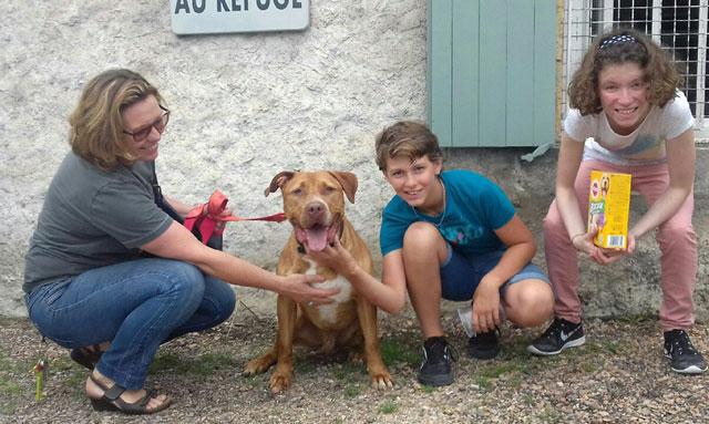 KAIZER (Braque croisé Dogue) Adopt_75