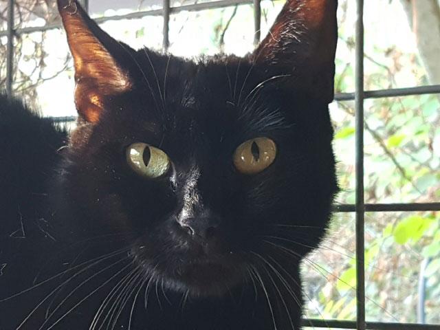 génial chatte noire grosses cames Dick