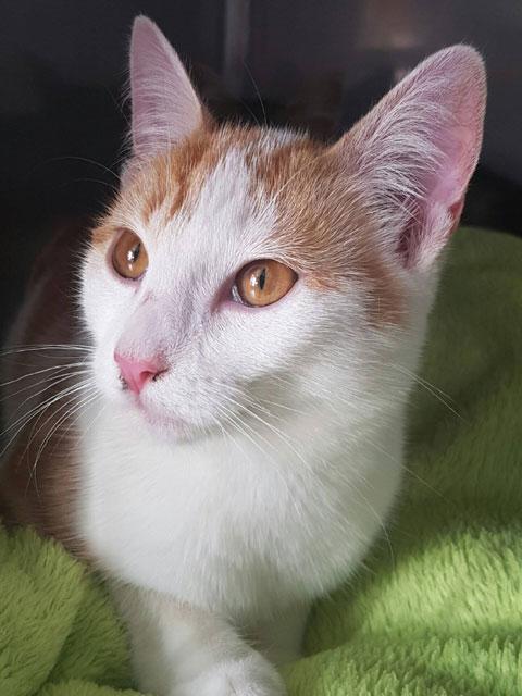EMMA (Rousse et blanche) Emma110