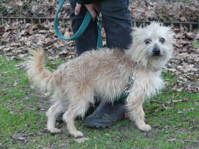 ESTON (Yorkshire Terrier) Eston810
