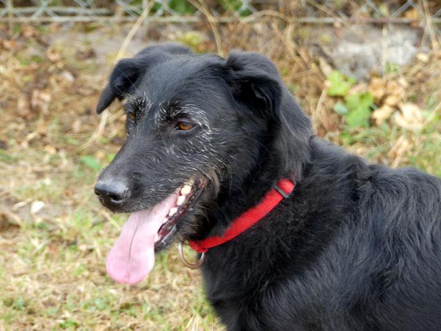 RYN (Croisée Labrador) Ryn1410