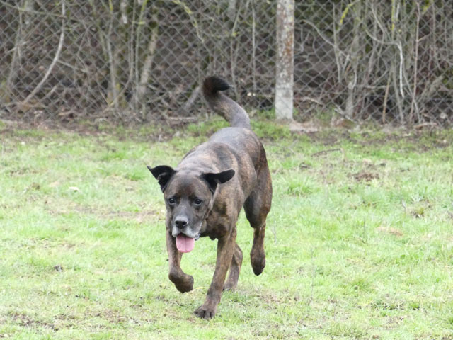 TEX (boxer X berger allemand) - Page 2 Tex211