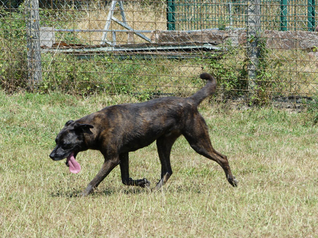 TEX (boxer X berger allemand) - Page 2 Tex710