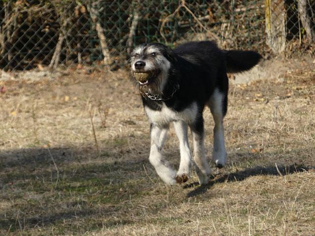 YAKARI (Husky croisé Griffon) Yakari14