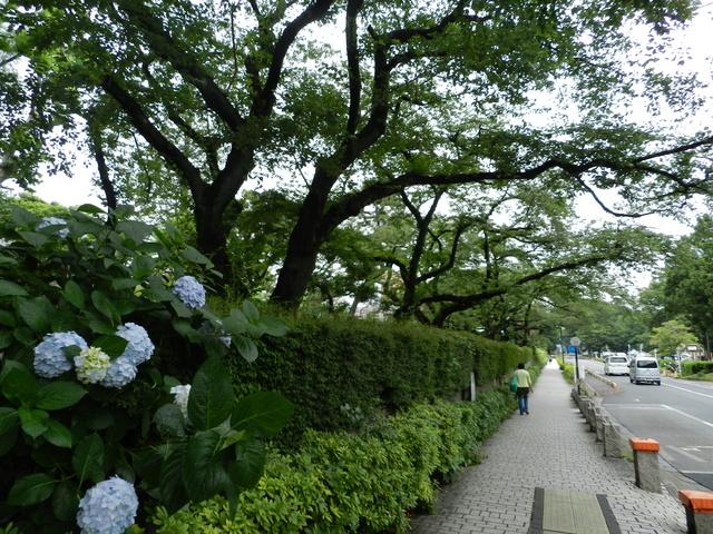 TR d'une balade au Japon en amoureux.  Dscn2526